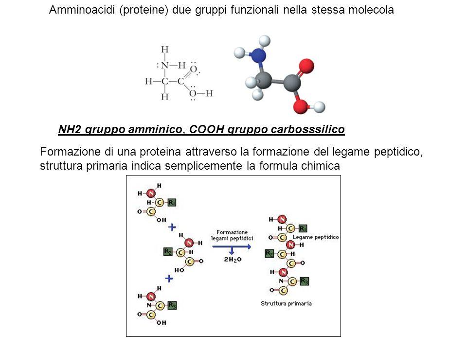 Amminoacidi (proteine) due gruppi funzionali nella stessa molecola