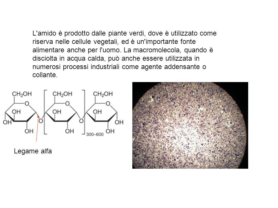 L amido è prodotto dalle piante verdi, dove è utilizzato come riserva nelle cellule vegetali, ed è un importante fonte alimentare anche per l uomo. La macromolecola, quando è disciolta in acqua calda, può anche essere utilizzata in numerosi processi industriali come agente addensante o collante.