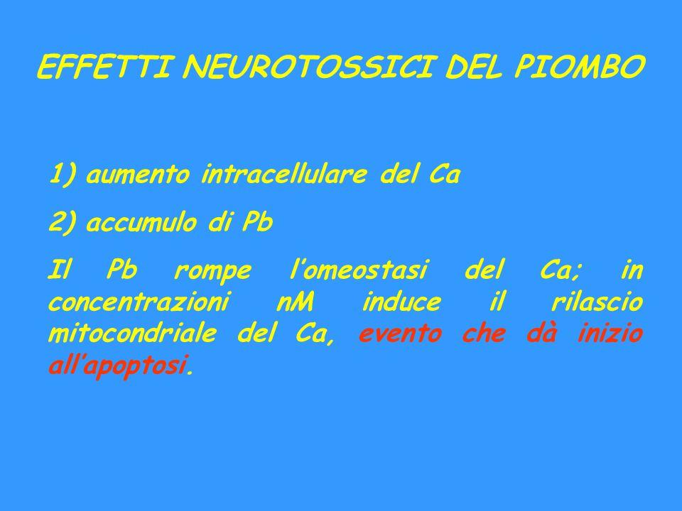 EFFETTI NEUROTOSSICI DEL PIOMBO