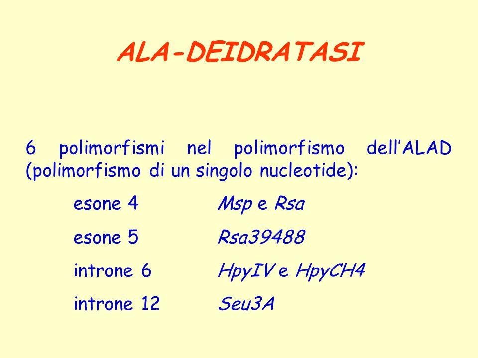 ALA-DEIDRATASI 6 polimorfismi nel polimorfismo dell'ALAD (polimorfismo di un singolo nucleotide): esone 4 Msp e Rsa.