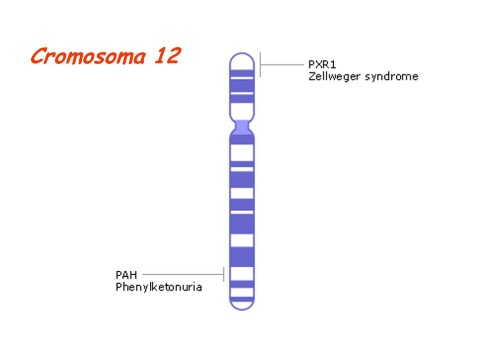 Cromosoma 12