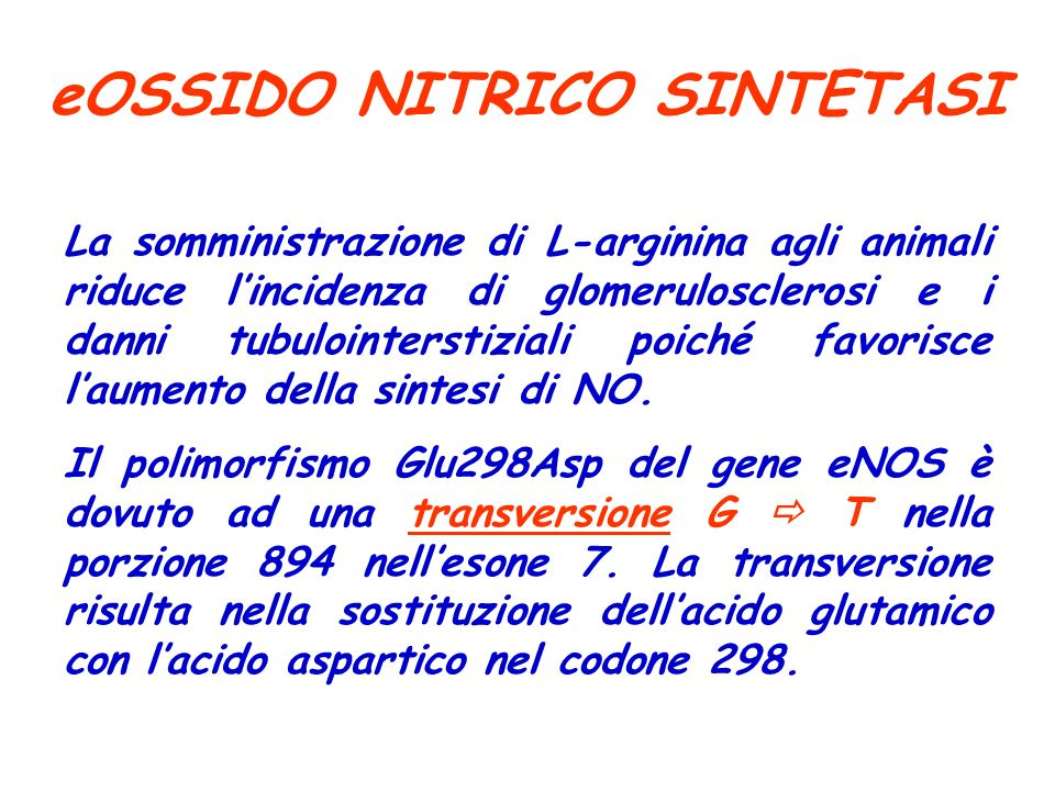 eOSSIDO NITRICO SINTETASI