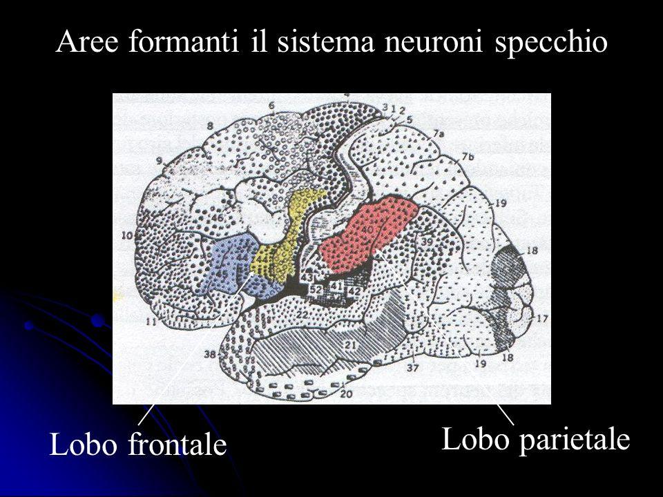 Aree formanti il sistema neuroni specchio