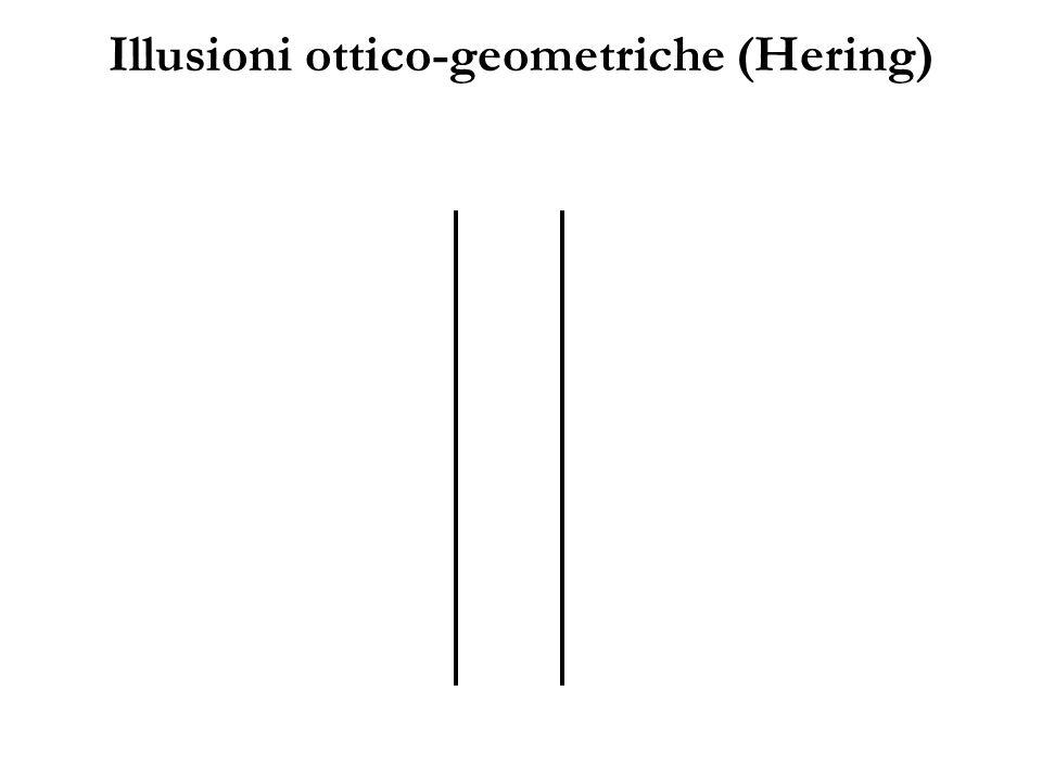 Illusioni ottico-geometriche (Hering)