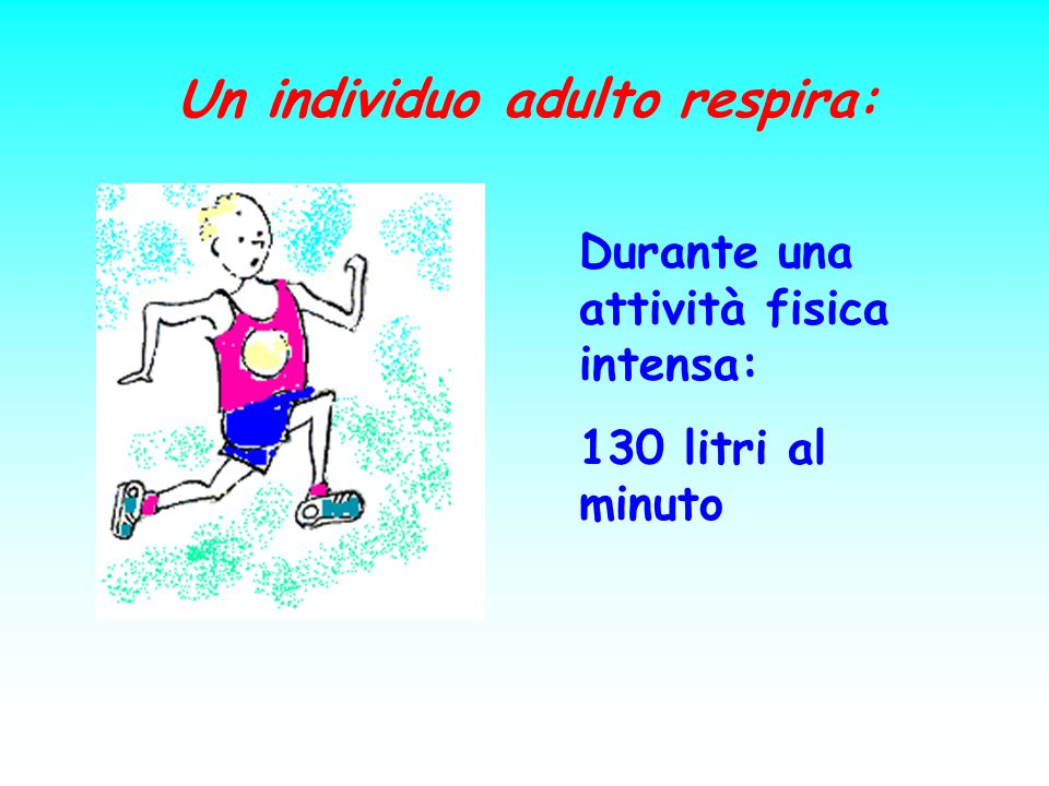 Un individuo adulto respira: