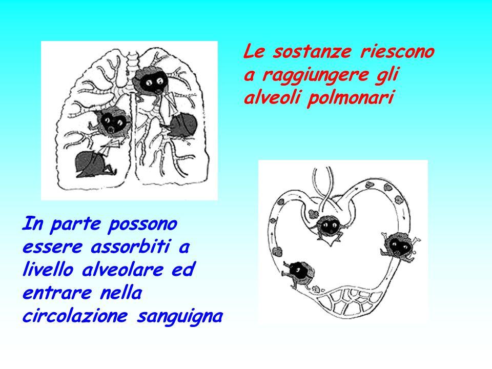 Le sostanze riescono a raggiungere gli alveoli polmonari