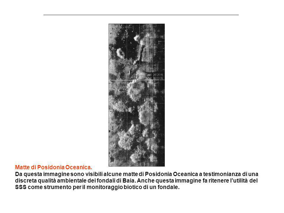 Matte di Posidonia Oceanica.