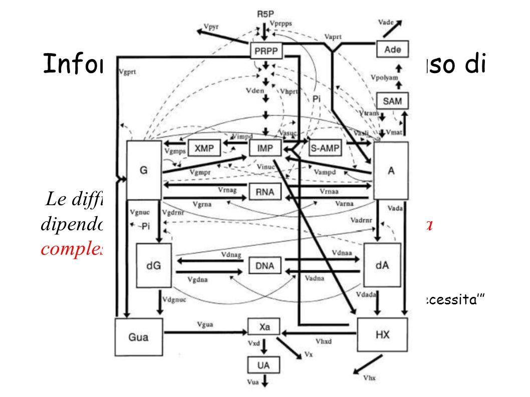 Systems Biology: Informatica e costruzione ed uso di modelli