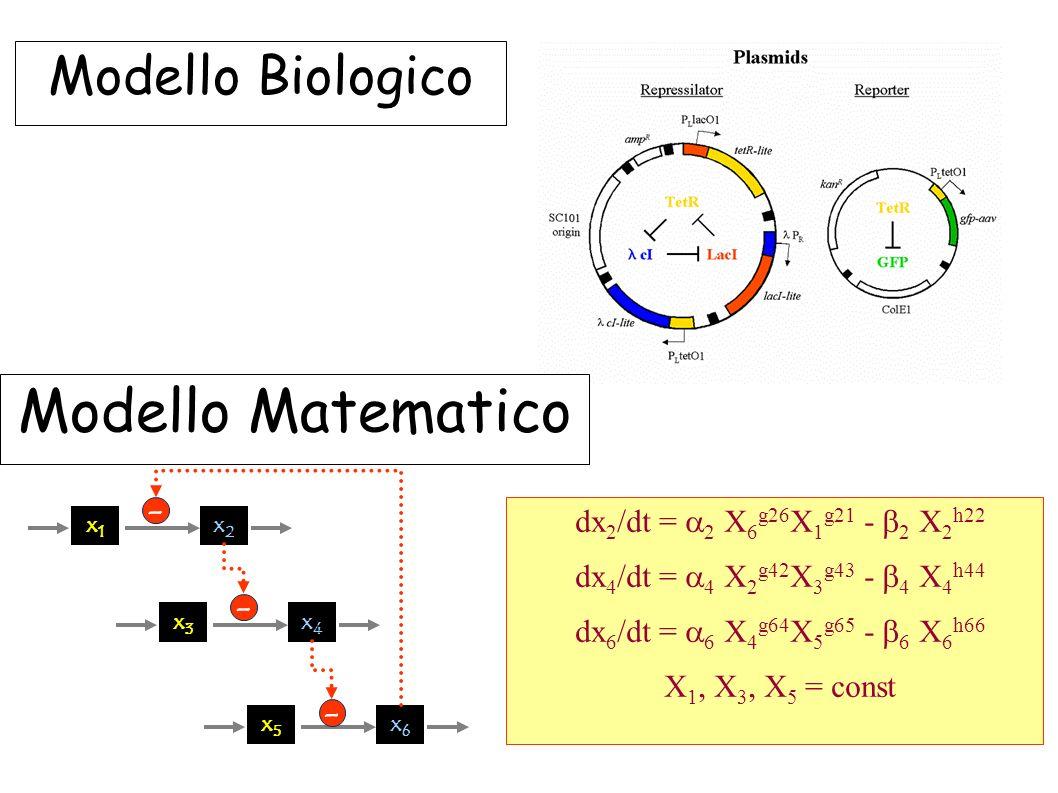 Modello Matematico Modello Biologico -