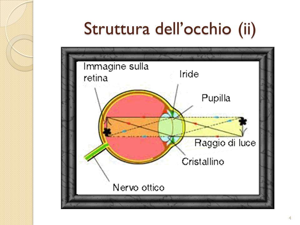 Struttura dell'occhio (ii)