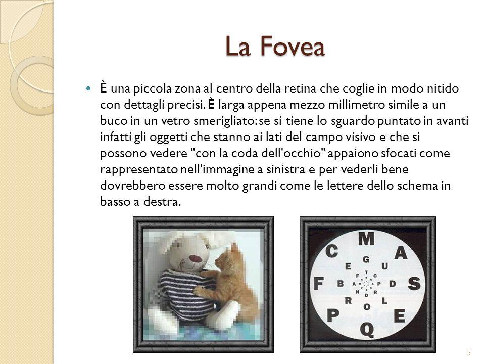 La Fovea