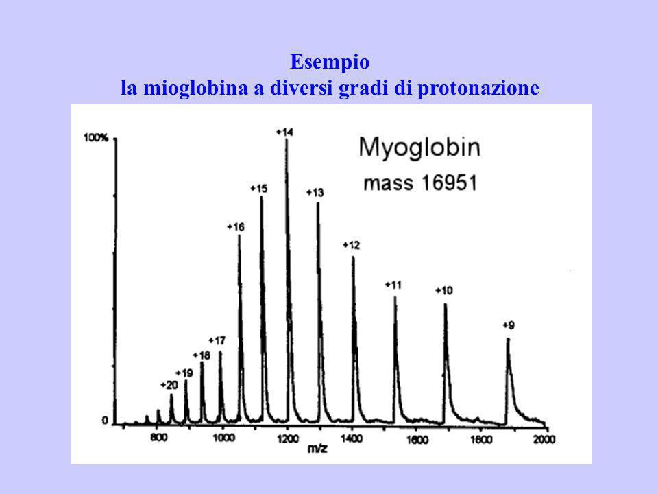 la mioglobina a diversi gradi di protonazione