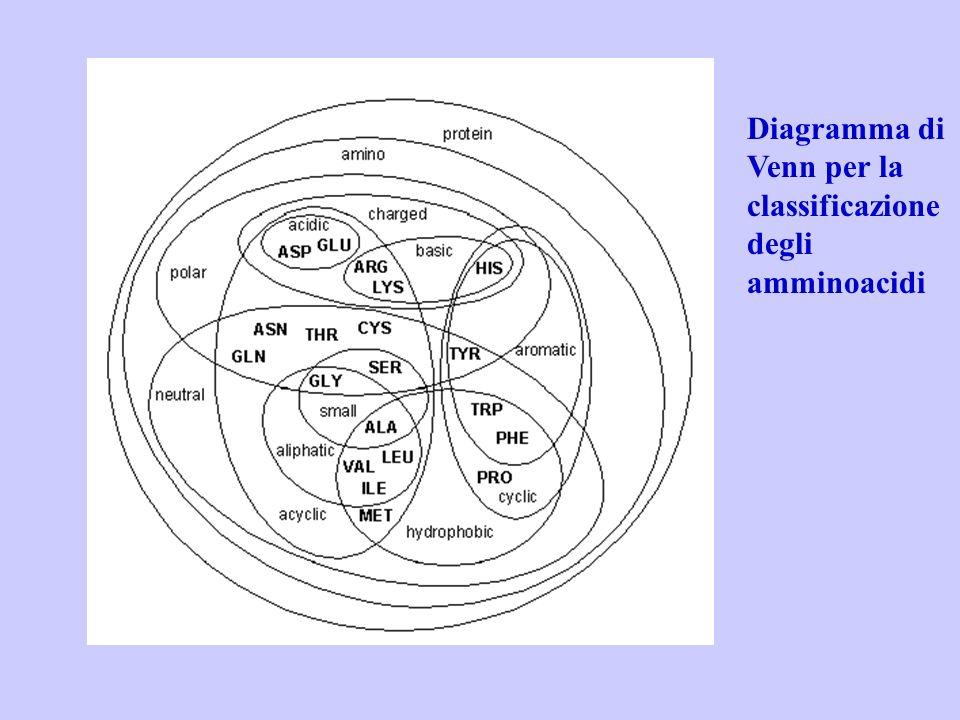 Diagramma di Venn per la classificazione degli amminoacidi