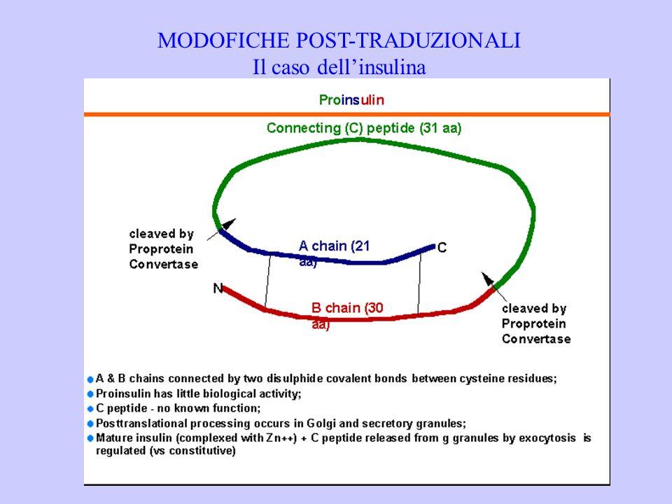 MODOFICHE POST-TRADUZIONALI