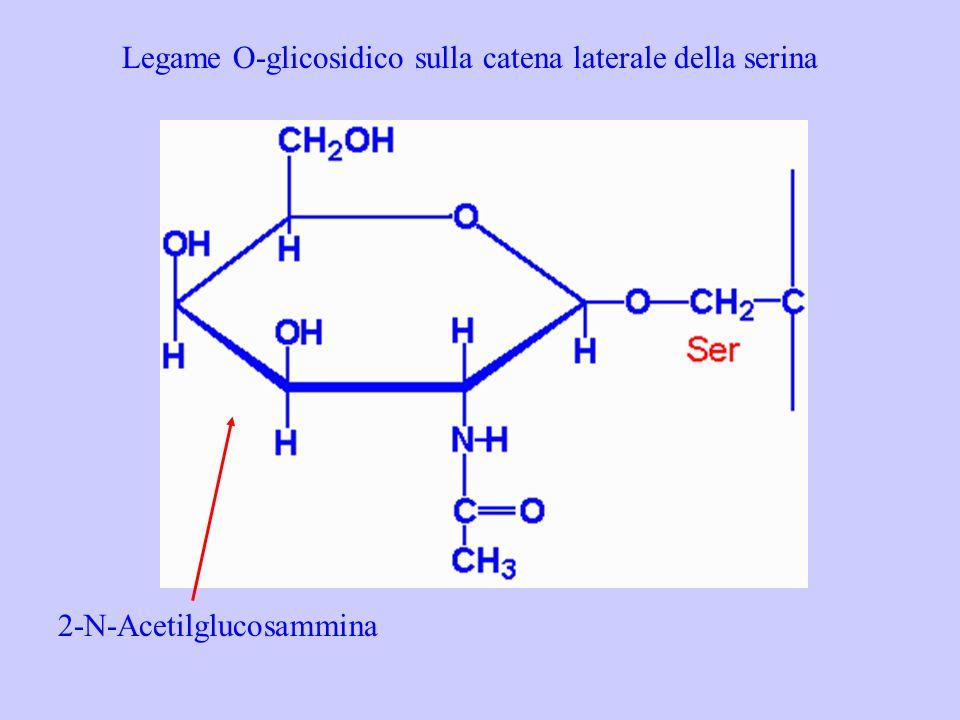 Legame O-glicosidico sulla catena laterale della serina