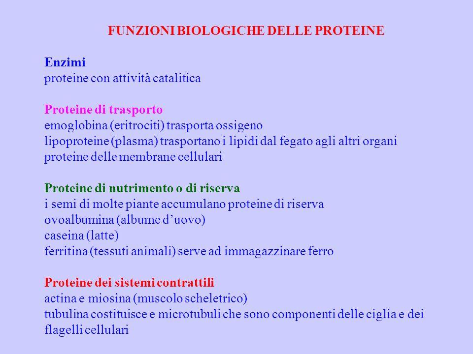 FUNZIONI BIOLOGICHE DELLE PROTEINE