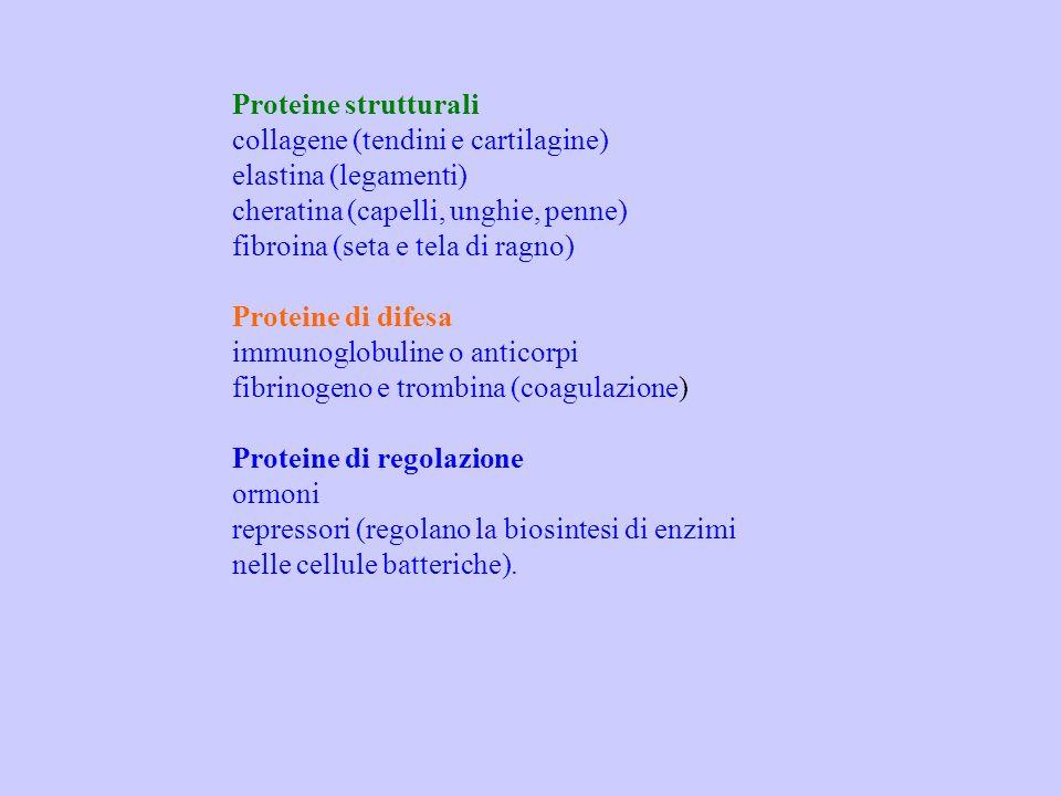 Proteine strutturali collagene (tendini e cartilagine) elastina (legamenti) cheratina (capelli, unghie, penne)