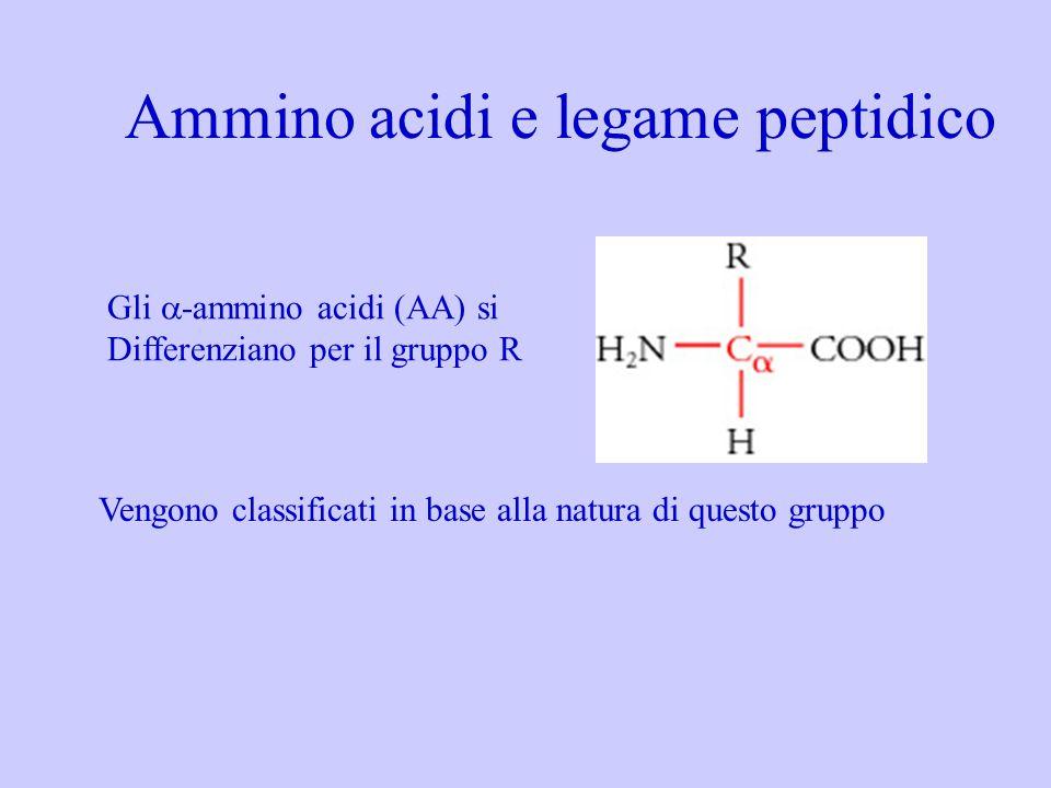 Ammino acidi e legame peptidico