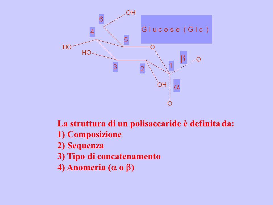 La struttura di un polisaccaride è definita da: