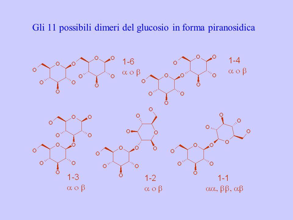 Gli 11 possibili dimeri del glucosio in forma piranosidica