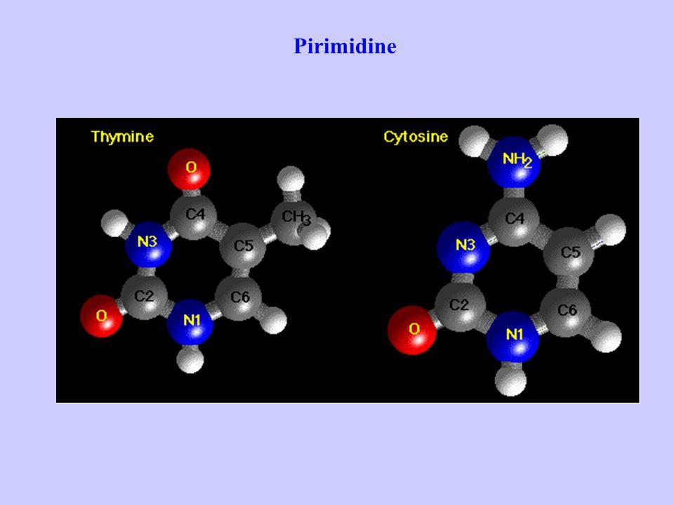 Pirimidine