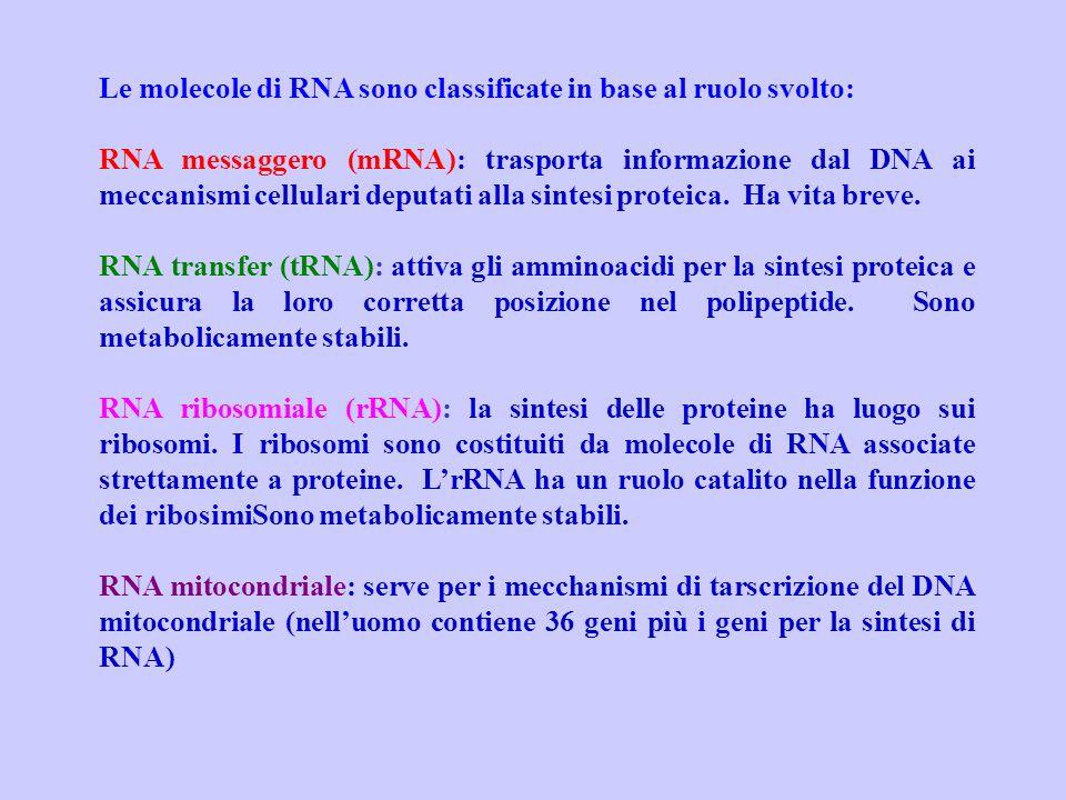 Le molecole di RNA sono classificate in base al ruolo svolto: