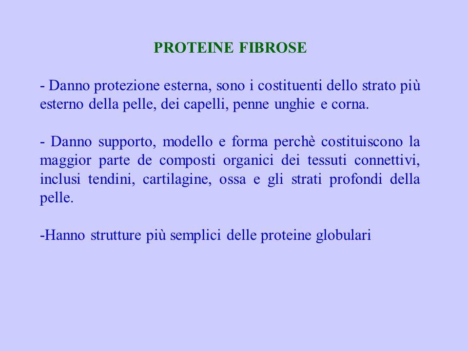 PROTEINE FIBROSE - Danno protezione esterna, sono i costituenti dello strato più esterno della pelle, dei capelli, penne unghie e corna.