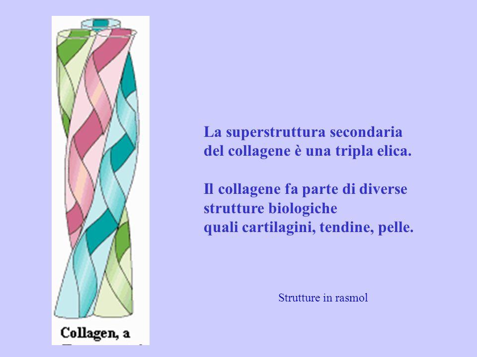 La superstruttura secondaria del collagene è una tripla elica.