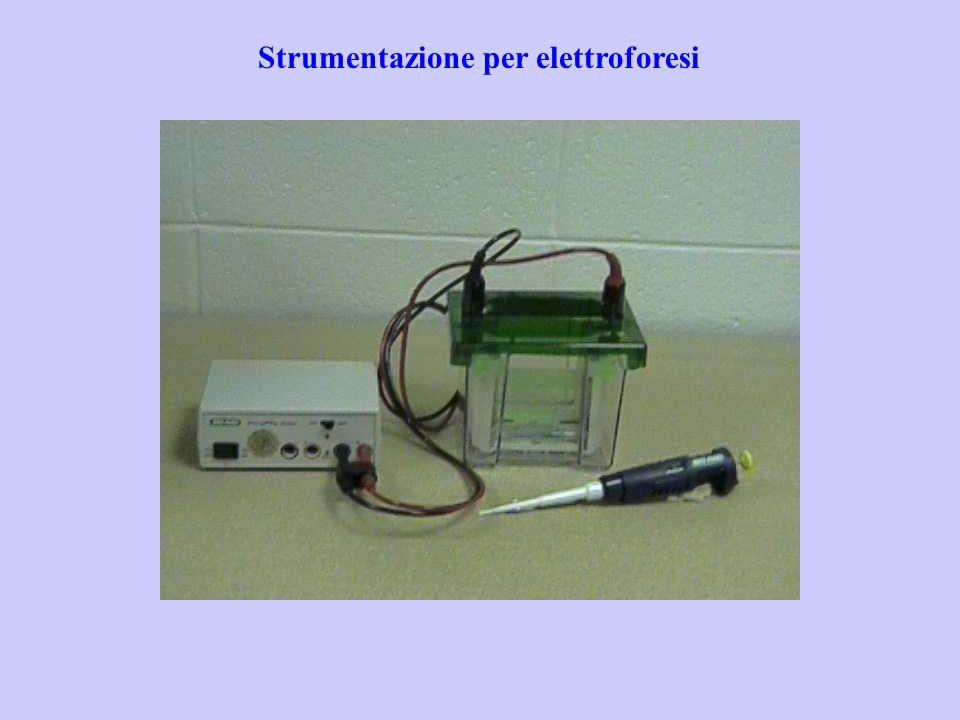 Strumentazione per elettroforesi