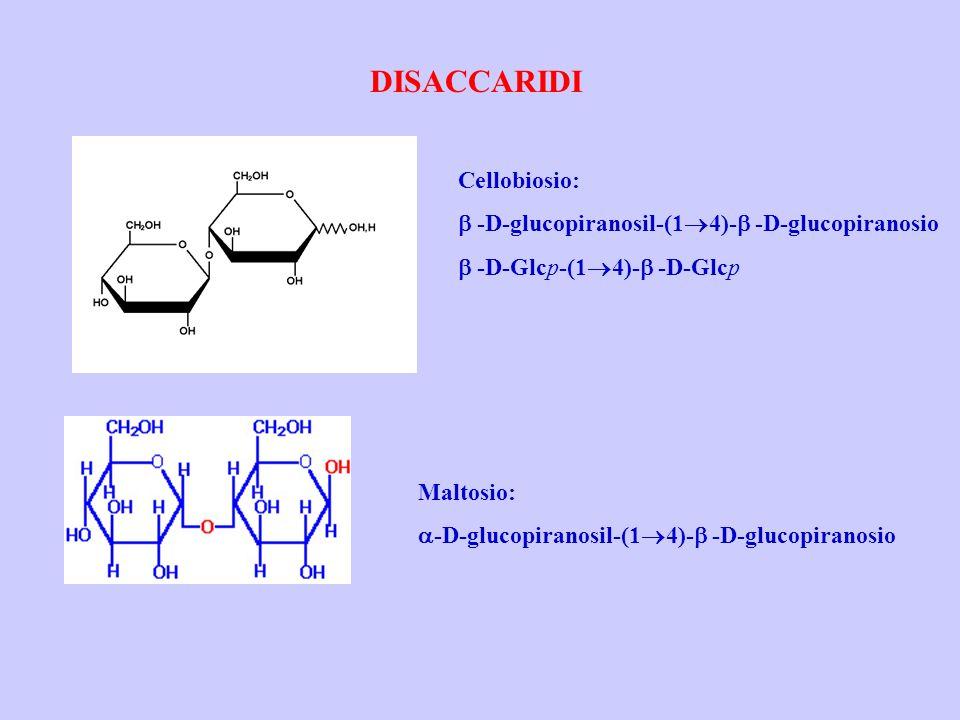 DISACCARIDI Cellobiosio: b -D-glucopiranosil-(14)-b -D-glucopiranosio