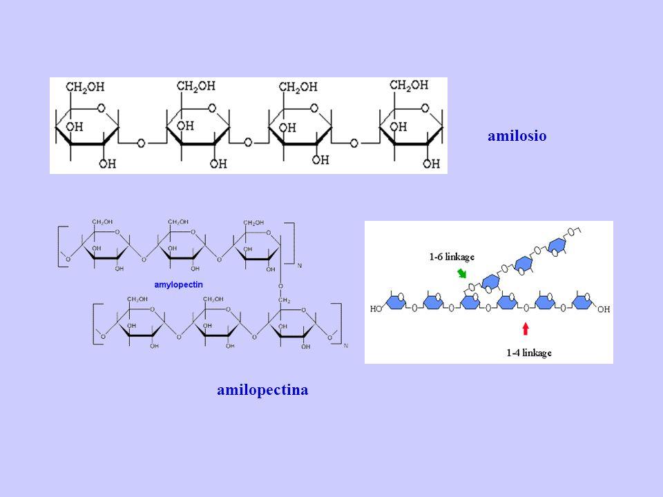amilosio amilopectina
