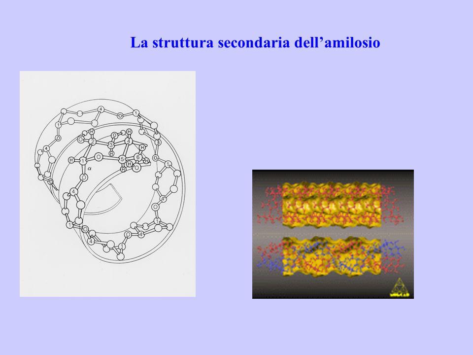 La struttura secondaria dell'amilosio