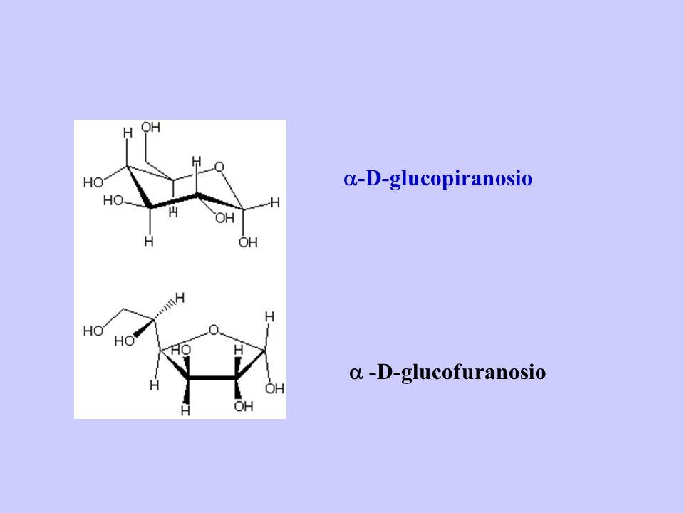 a-D-glucopiranosio a -D-glucofuranosio