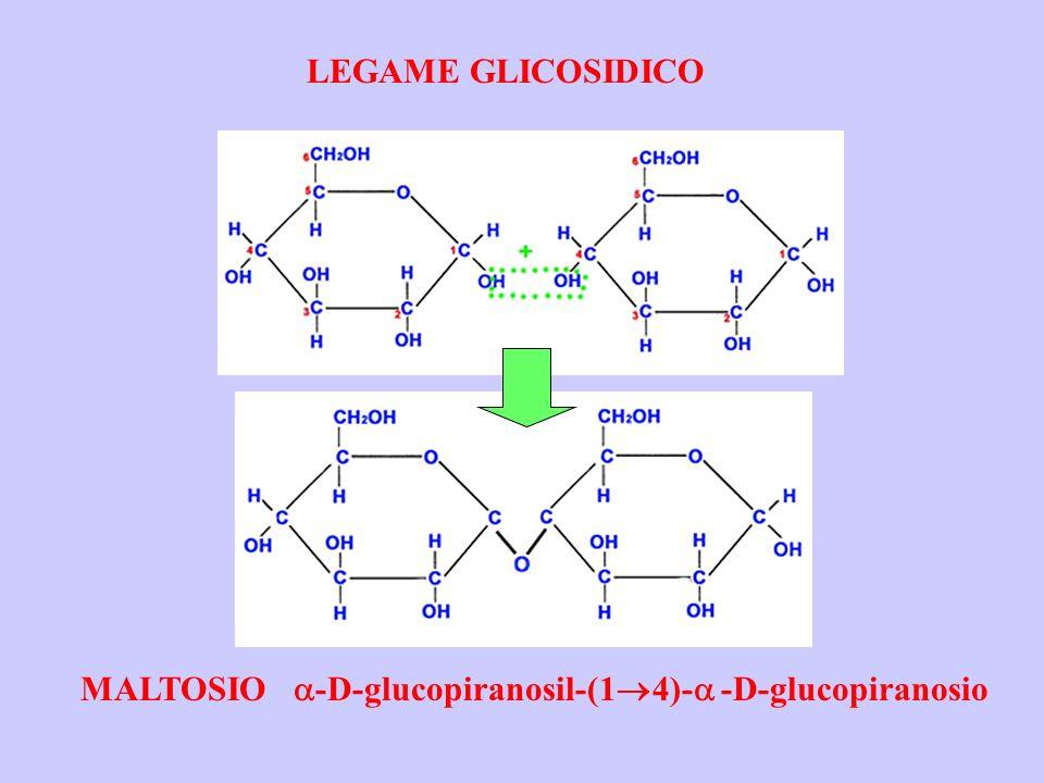 LEGAME GLICOSIDICO MALTOSIO a-D-glucopiranosil-(14)-a -D-glucopiranosio