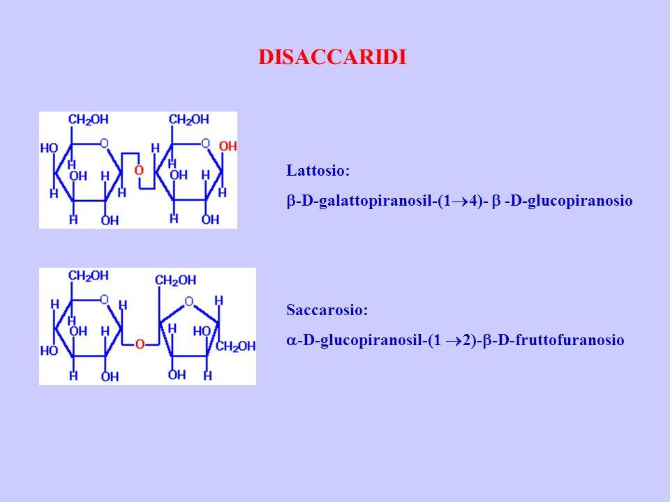 DISACCARIDI Lattosio: b-D-galattopiranosil-(14)- b -D-glucopiranosio
