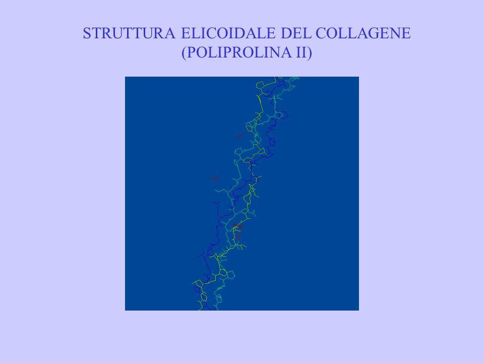 STRUTTURA ELICOIDALE DEL COLLAGENE