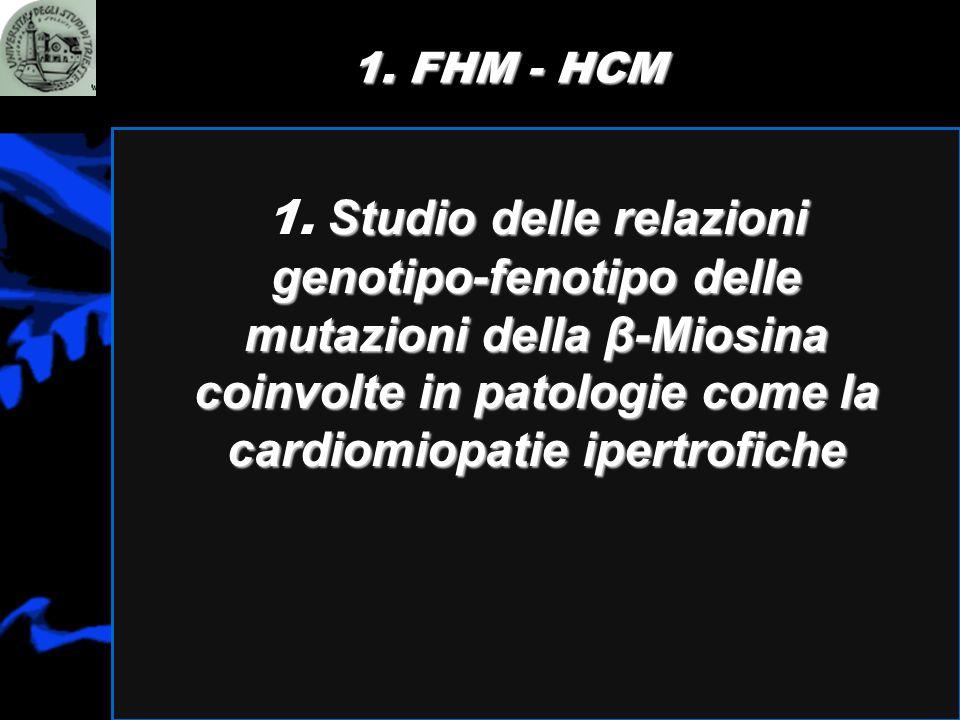 1. FHM - HCM 1.