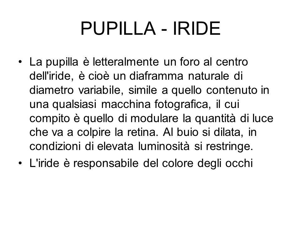 PUPILLA - IRIDE