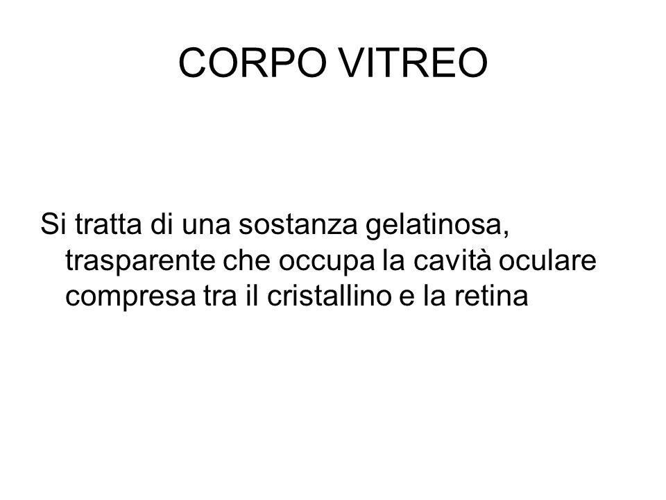CORPO VITREOSi tratta di una sostanza gelatinosa, trasparente che occupa la cavità oculare compresa tra il cristallino e la retina.