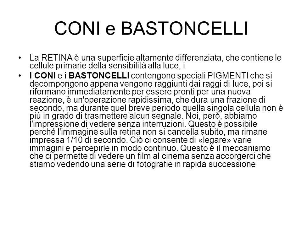 CONI e BASTONCELLILa RETINA è una superficie altamente differenziata, che contiene le cellule primarie della sensibilità alla luce, i.