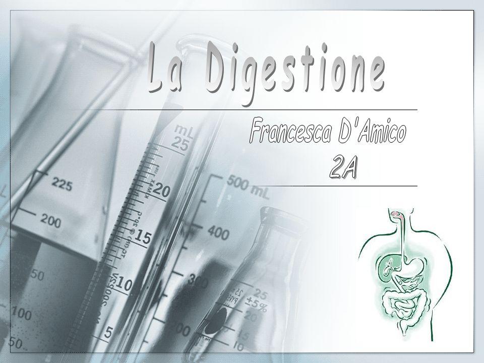 La Digestione Francesca D Amico 2A