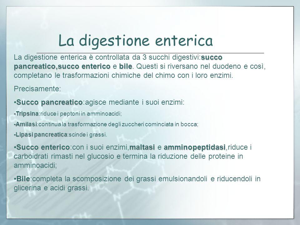 La digestione enterica