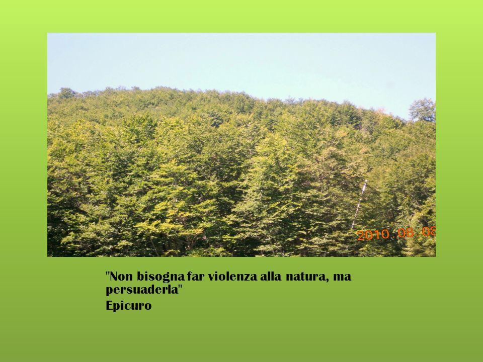 Non bisogna far violenza alla natura, ma persuaderla