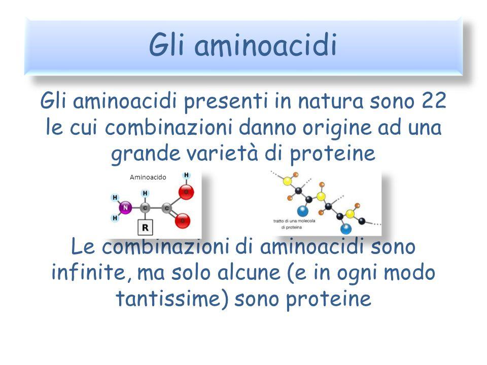 Gli aminoacidi Gli aminoacidi presenti in natura sono 22 le cui combinazioni danno origine ad una grande varietà di proteine.