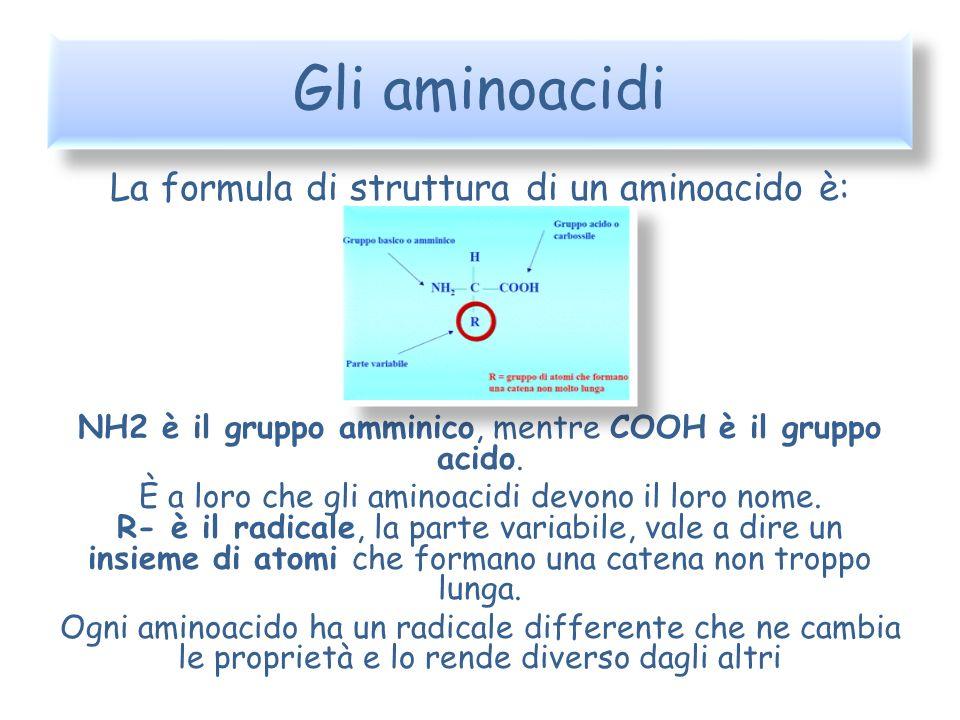 Gli aminoacidi La formula di struttura di un aminoacido è: