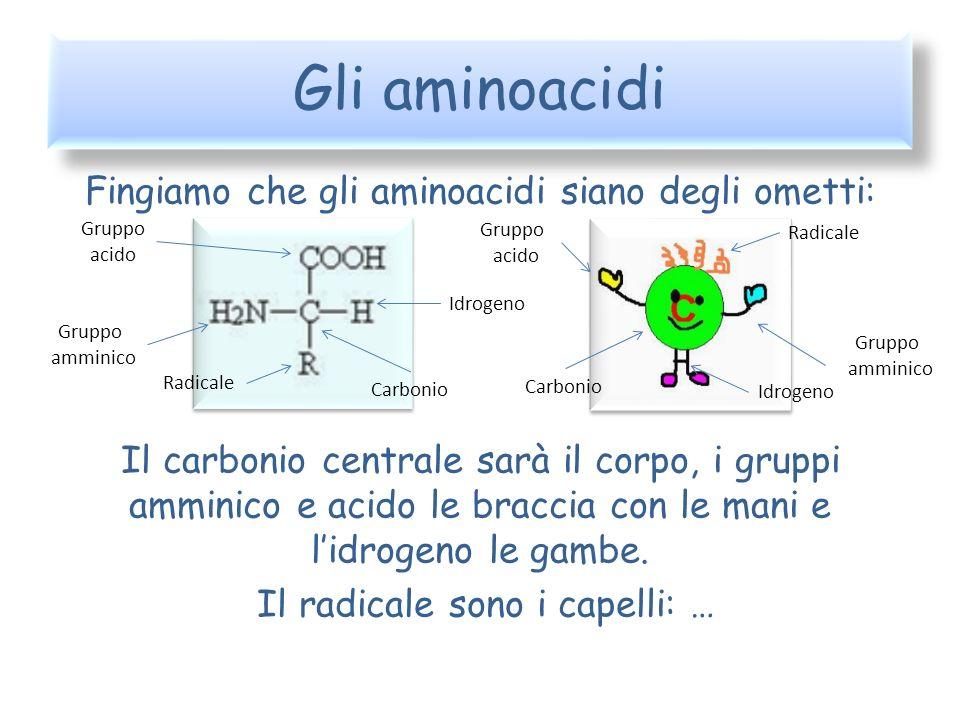 Gli aminoacidi Fingiamo che gli aminoacidi siano degli ometti: