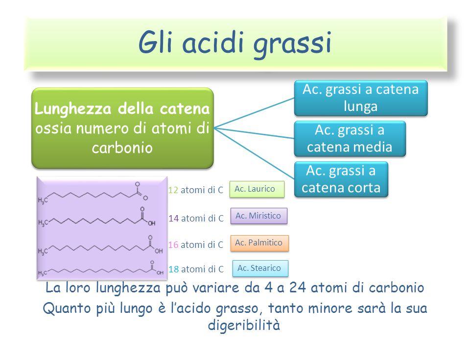 Gli acidi grassi La loro lunghezza può variare da 4 a 24 atomi di carbonio. Quanto più lungo è l'acido grasso, tanto minore sarà la sua digeribilità.