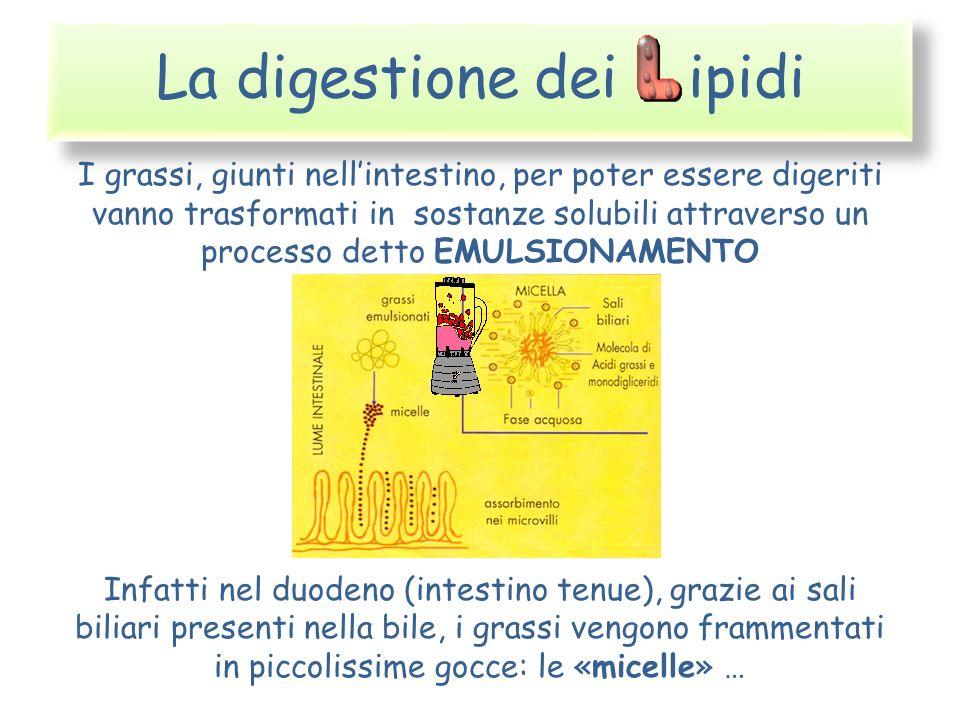 La digestione dei ipidi