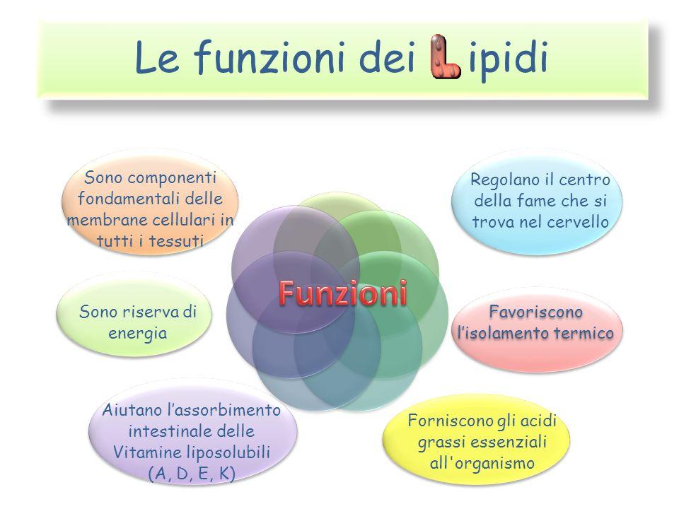 Le funzioni dei ipidi Funzioni