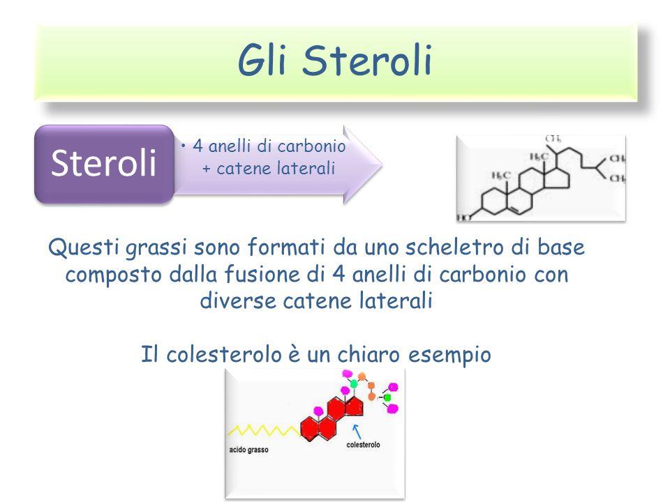 Gli Steroli Steroli. 4 anelli di carbonio + catene laterali.